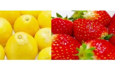AAA-1.佐川の冬の果物セット【期間・数量限定】
