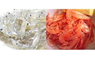 1-170 冷凍生桜えびと冷凍生しらすセット