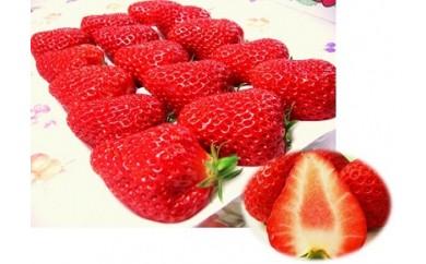 2-062 静岡特産ほっぺが落ちるほど美味しい高級紅ほっぺいちごデラックス大粒×4トレイ
