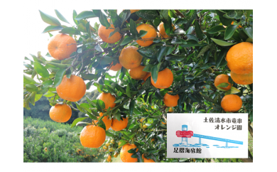 【W-2】オレンジ園のぽんかん【5㎏】