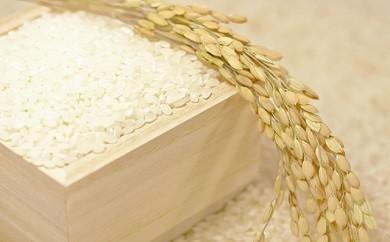 【お米15kg食べ比べセット】 「つや姫」&「はえぬき」&「ひとめぼれ」