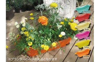 葉っぱの形をしたプランター「コロコノハ」2個セット 色:レッド