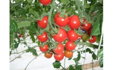 (12)ミニトマト