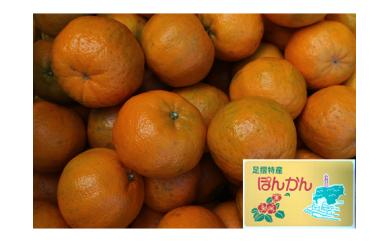 【H-20】井村農園の足摺ぽんかん【10㎏】