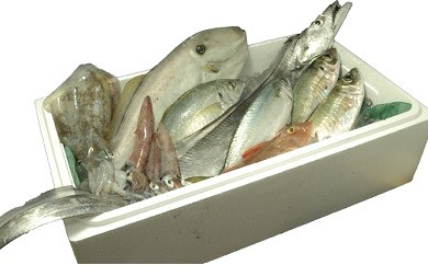 漁協直送!鮮度抜群!豪華土佐黒潮鮮魚セット 高級魚入り 【大漁20,000円コース】