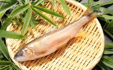[№5682-0088]日本三大急流球磨川で育った天然鮎