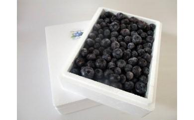 AG04 能登町産冷凍ブルーベリー【50pt】