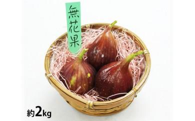 No.078 大阪府羽曳野特産 無花果