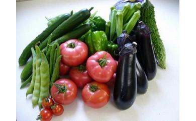 【ふるさと納税】10-3栄町産新鮮・季節の野菜詰め合わせ