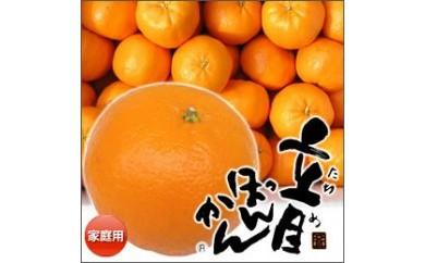 CA61 高知県産  ご家庭用  立目ぽんかん  5kg/サイズ:2L or 3L【600pt】