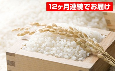 [№5836-0085]島木かぐや米 (5kg) 12回 頒布会