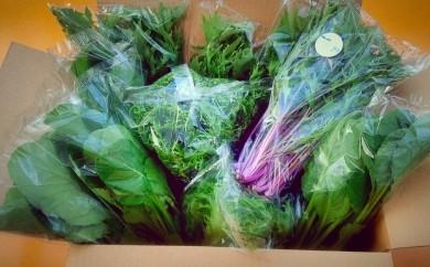 20S06 水耕栽培の葉物野菜