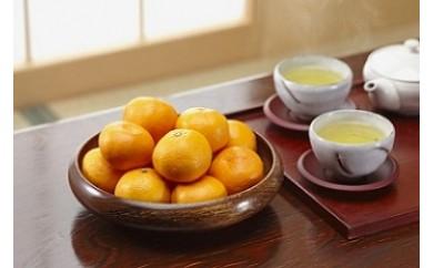 AA35 ポンカン【姫柑】、有機栽培茶のおこたコラボ