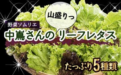 005-012 野菜ソムリエ中嶌さんのリーフレタスセット