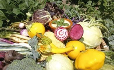 【L117】バーニャカウダ野菜セットショート【頒布会】季節の野菜を毎月お送りします【240pt】