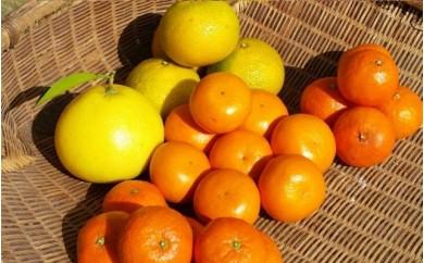 B-053 年末旬の柑橘詰め合わせ