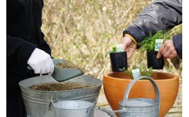 生活の木 メディカルハーブガーデン薬香草園 ハーブ寄せ植え体験レッスン チケット