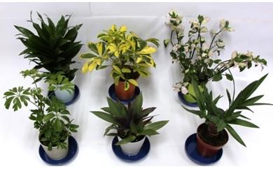 A-55. 観葉植物3鉢セット