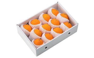 B032 和歌山産箱詰めネーブルオレンジ【25pt】