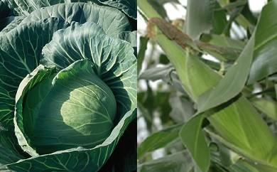 地産品①野菜セット