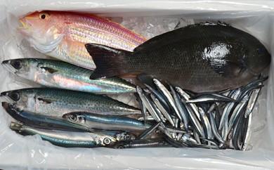 黒潮の鮮魚とれたてセット