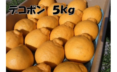 B213 デコポン 約5kg