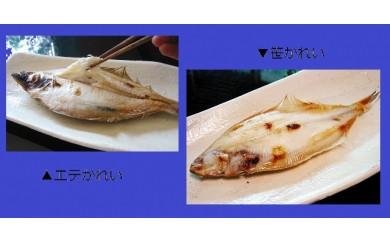 B170 おおだの定番干物!かれい食べ比べセット(合計10尾)