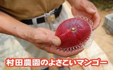 村田農園のよさこいマンゴー