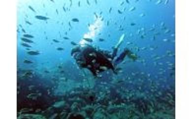 海中探検にチャレンジ!黄金崎で体験ダイビングコース