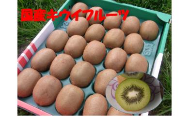 B221 国産キウイフルーツ 20~24玉