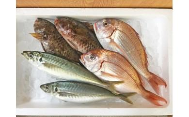 [№5910-0030]魚!朝とれたて鮮魚 1.5kg