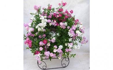 [№5809-1230]【クレカ限定】母の日に!ウェルカムレンゲローズ四季咲きミニバラリング植え