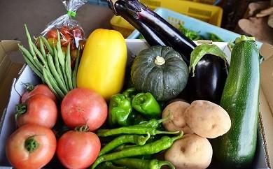 期間限定 農家さんの夏野菜セット