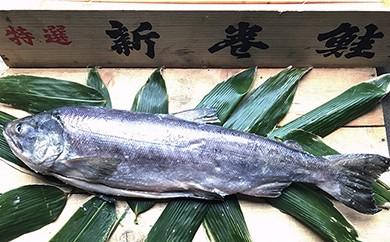C-014 新巻鮭 4kg