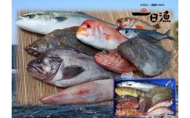 B176 『おおだ一日漁』旬の鮮魚詰め合わせ