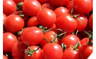 A112 【元祖】ななちゃんトマト(果物トマト)