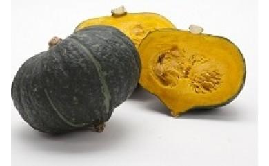 【6/21〆切】九重栗(くじゅうくり)かぼちゃ
