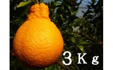 RK-14不知火(デコポン)【3kg】
