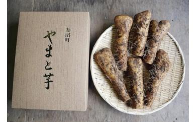 52 島田青果の大和芋(4㎏)