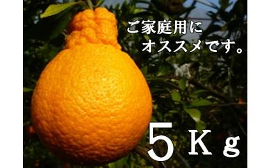 RK-15不知火(デコポン)【5kg】※訳あり商品