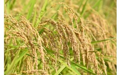 【0030-0038】特選 飛騨産米(10kg)とご飯のお供セット