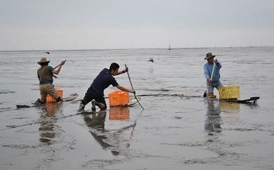 C-12 【有明海伝統ワラスボ漁体験】すぼかき体験で珍魚と出会う