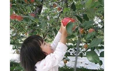 【A0915】秋からのお楽しみ! りんご狩り体験
