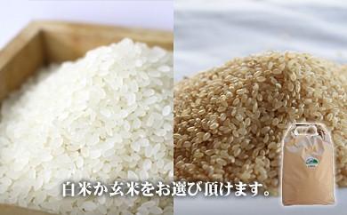 21.特別栽培米こしひかり「大山のひと粒」(白米)