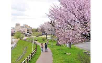 No.052 「千歳川桜プロジェクト」記念碑への記名&桜の植樹