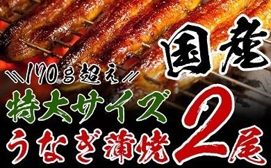 A43 【大満足】うなぎ蒲焼(長焼特大サイズ2尾入)