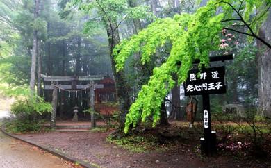 A-01 語り部と歩く熊野古道ウォークの旅  プラン①:語り部と歩く熊野古道ウォーク