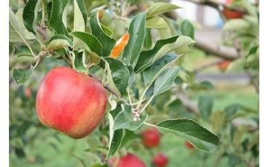 C0063 北上産 果汁たっぷり りんご 品種おまかせ お得な4kg
