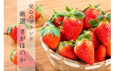 【G-7】白石産いちご「さがほのか」(150g×6パック)