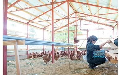 AU03 奥丹波の自然が育む純国産鶏の平飼いたまご25個≪定期6回≫【52500pt】